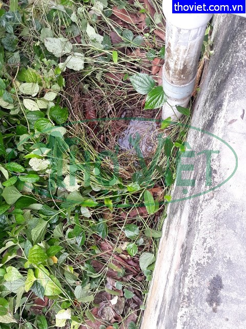 Dò nước rò rỉ Khu công nghiệp tại Tây Ninh